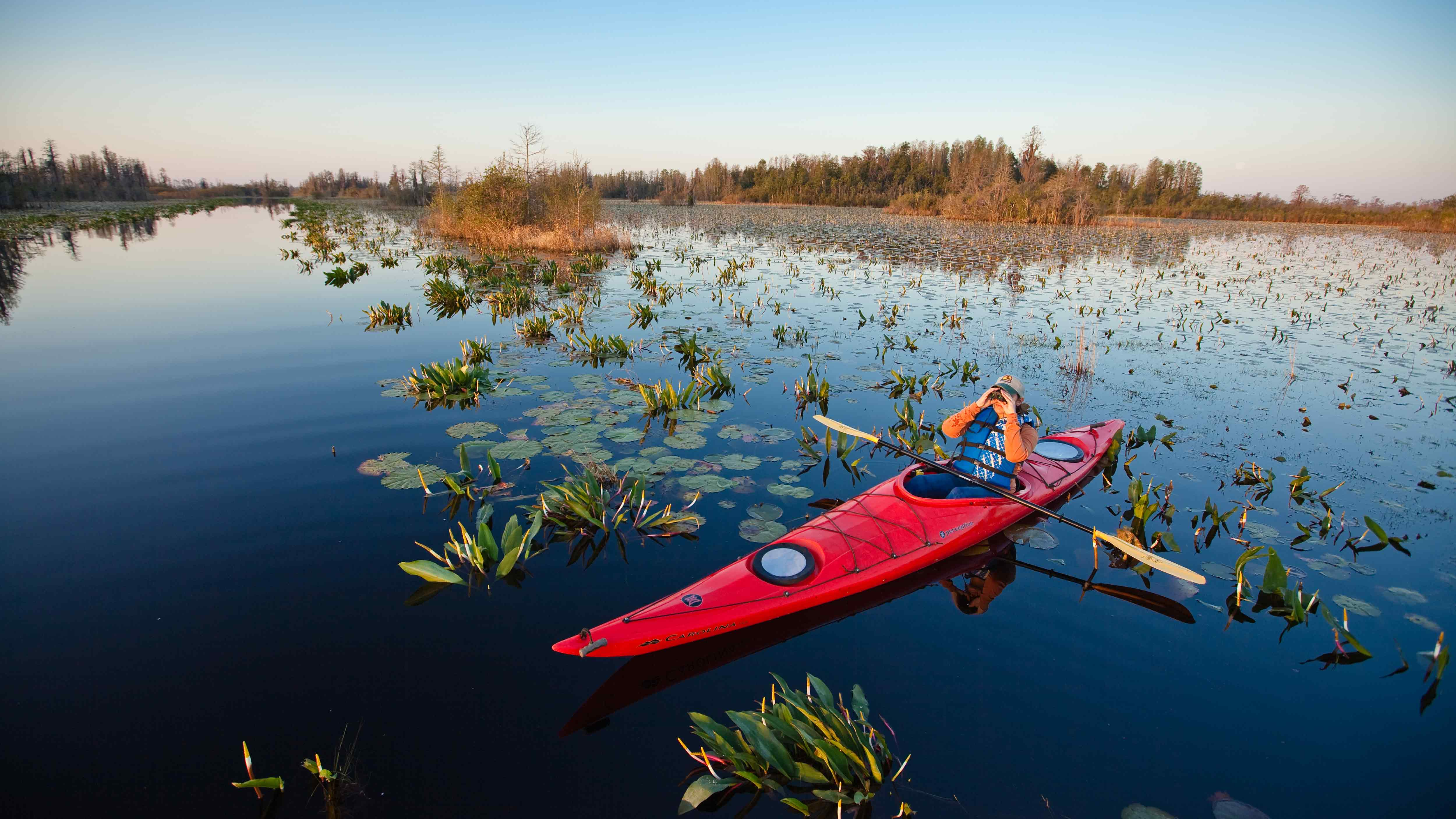 Kayaking in the Okefenokee Swamp