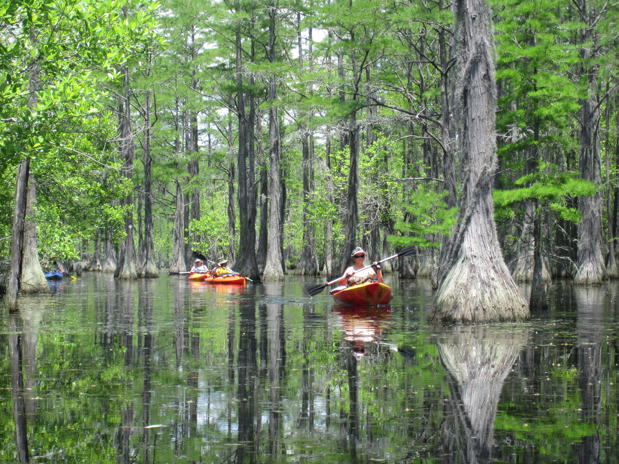 12 Unforgettable Places to Kayak in Georgia   Official Georgia ...
