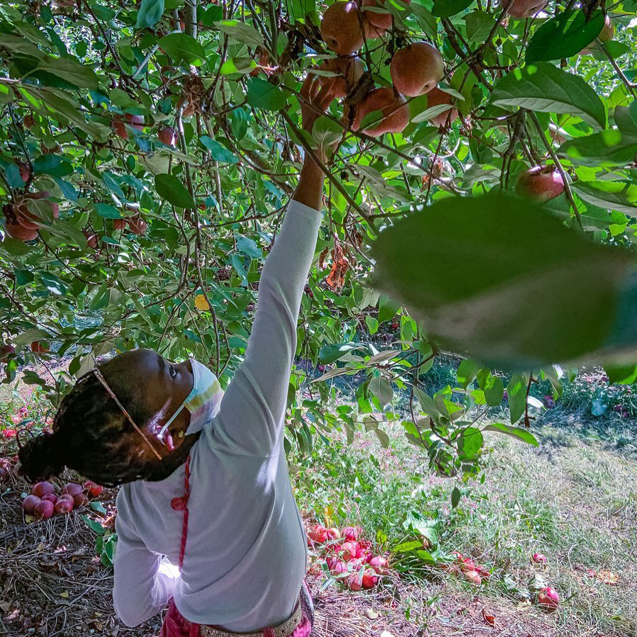 Apple picking at B.J. Reece Orchards in Ellijay, Georgia. Photo by @aishatopelawrence