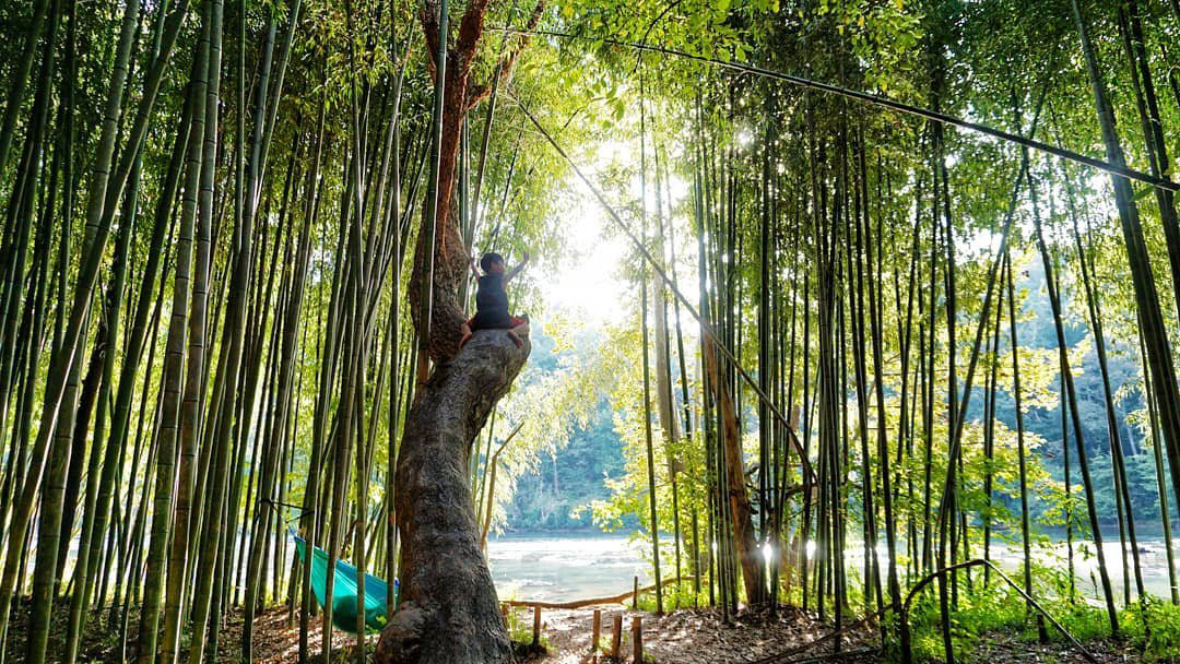 Bamboo forest on the East Palisades Trail by the Chattahoochee River. Photo by Kelly Wilson, @pokkychoo