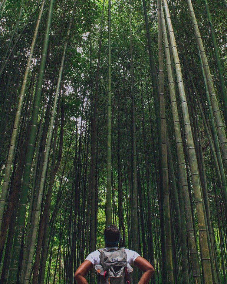 Bamboo forest on the East Palisades Trail along the Chattahoochee River in Atlanta. Photo by Brittany Adele Foster, @lifeofbrittanyadele