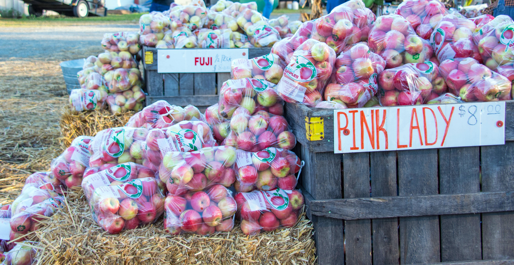 Bags of Pink Lady and Fuji apples on display at the Georgia Apple Festival in Ellijay, Georgia