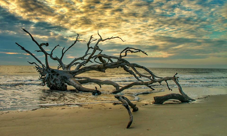 Driftwood Beach Jekyll Island Photo By Lisa Westberry Via Facebook