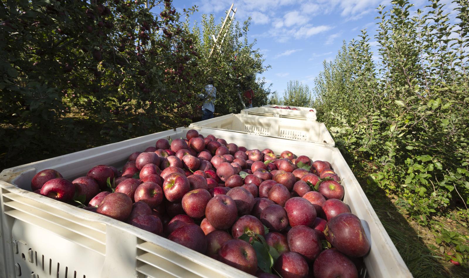 Dahlonega And Nature Foods