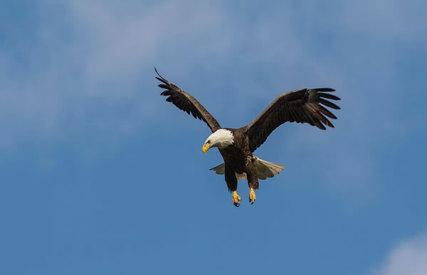 4 Places To See Bald Eagles In Georgia Official Georgia