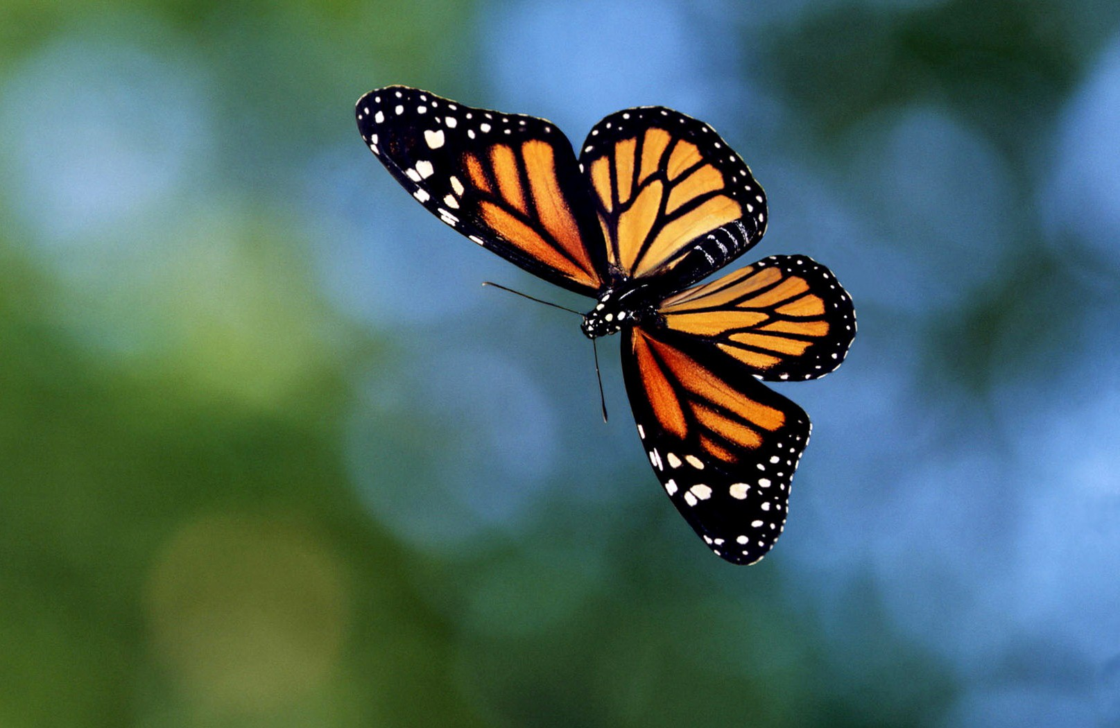 5 Places To See Butterflies In Georgia Official Georgia