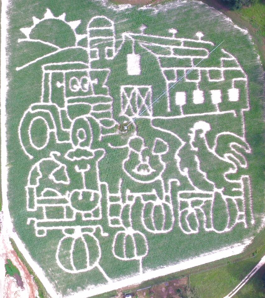 2017 corn maze at Calhoun Produce in Ashburn, Georgia