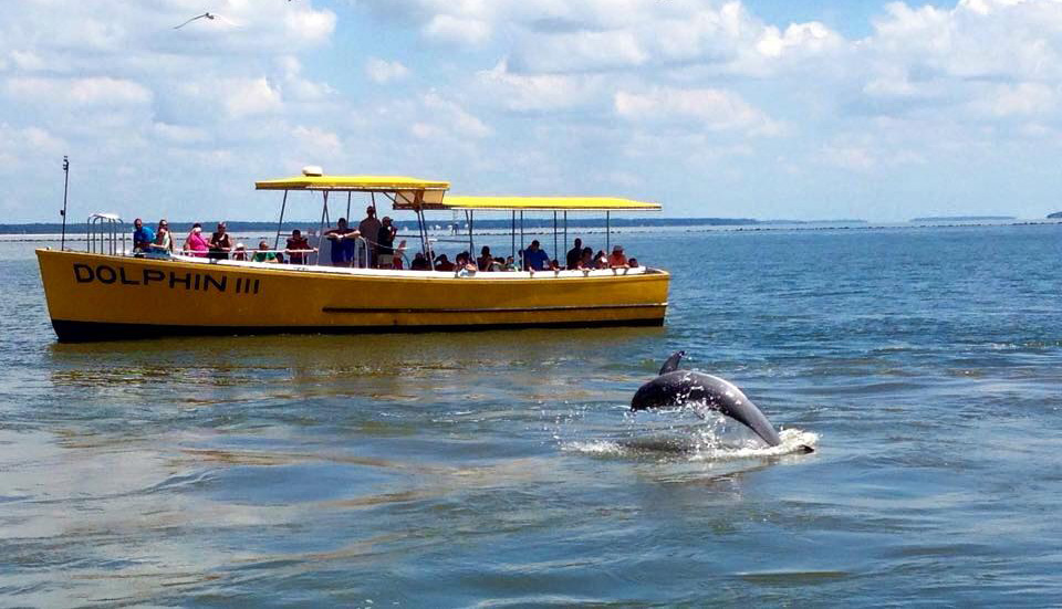 Captain Mike's Dolphin Tours on Tybee Island