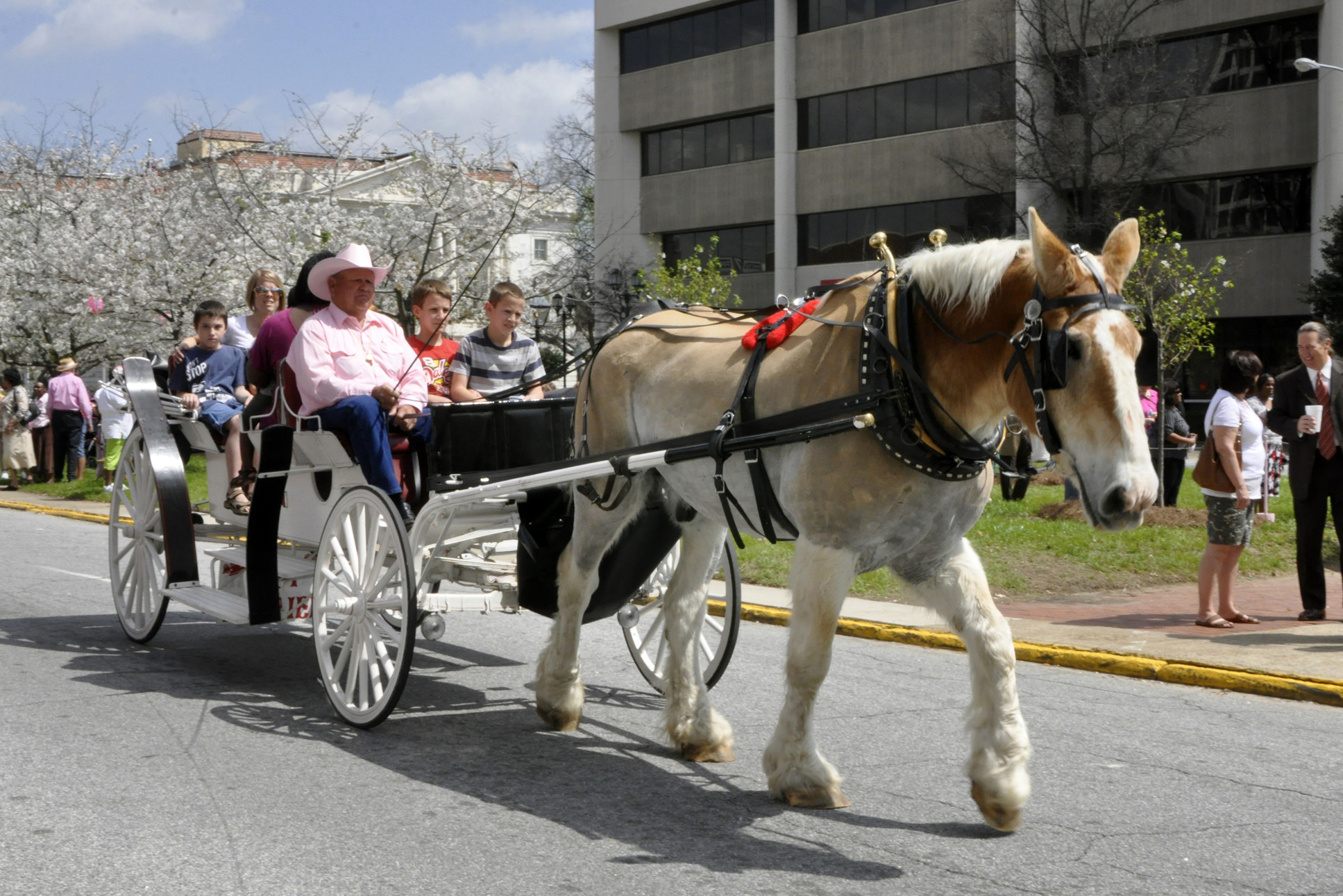 Enjoy horse-drawn carriage rides in Macon during the International Cherry Blossom Festival