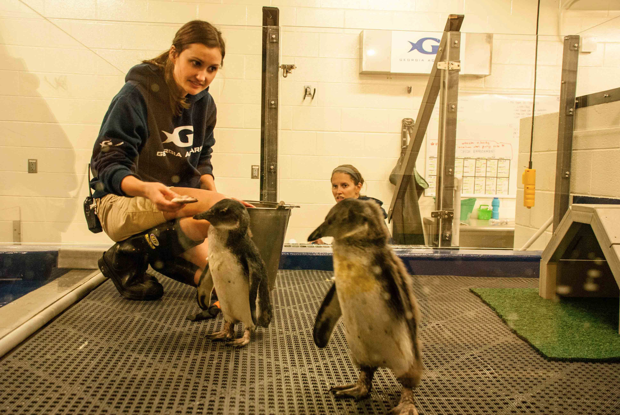 Take a Behind the Scenes tour of the Georgia Aquarium to see how the animals are fed