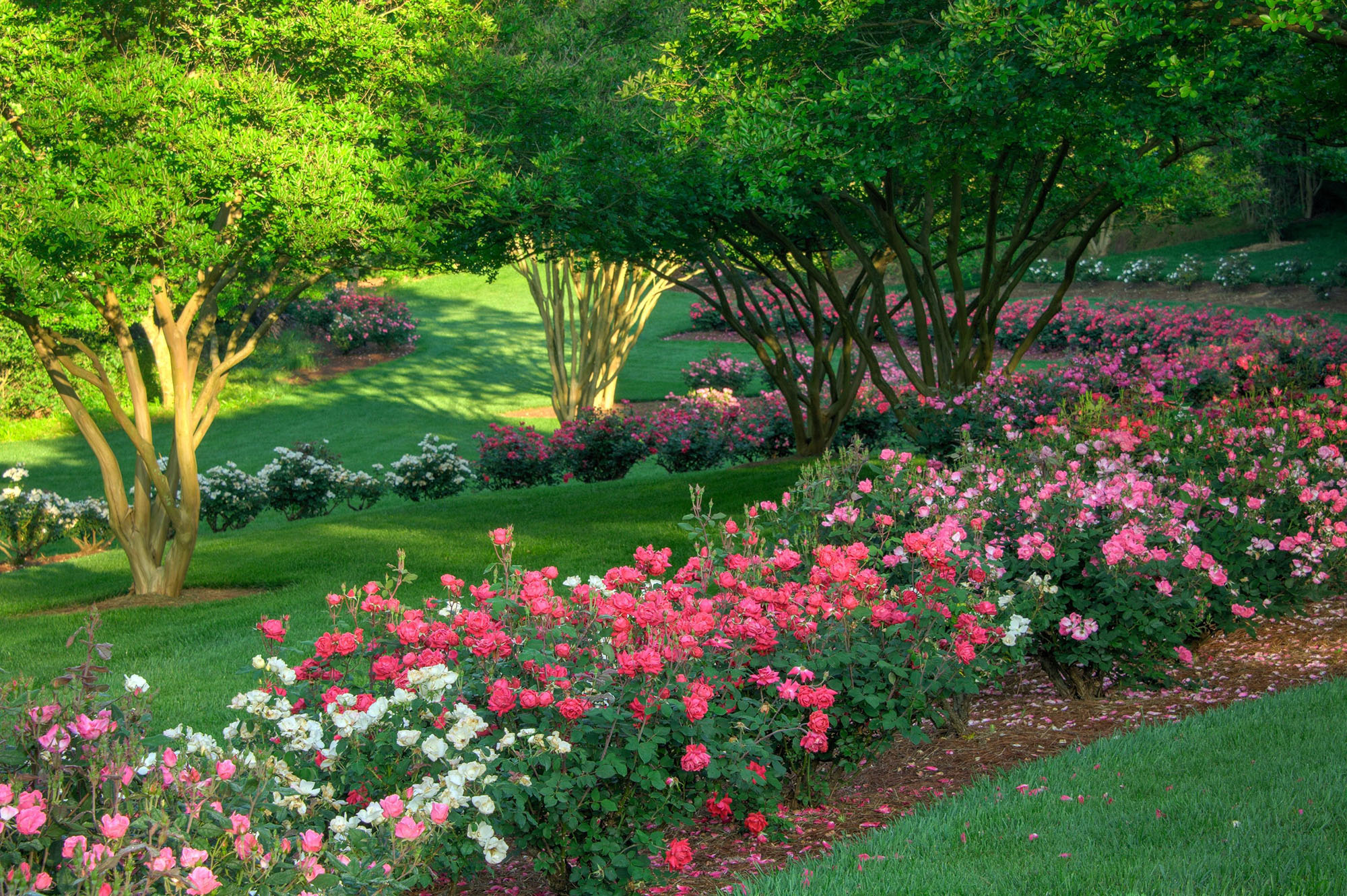 Roses In Garden: Spring Garden Tips And Inspiration From North Georgia