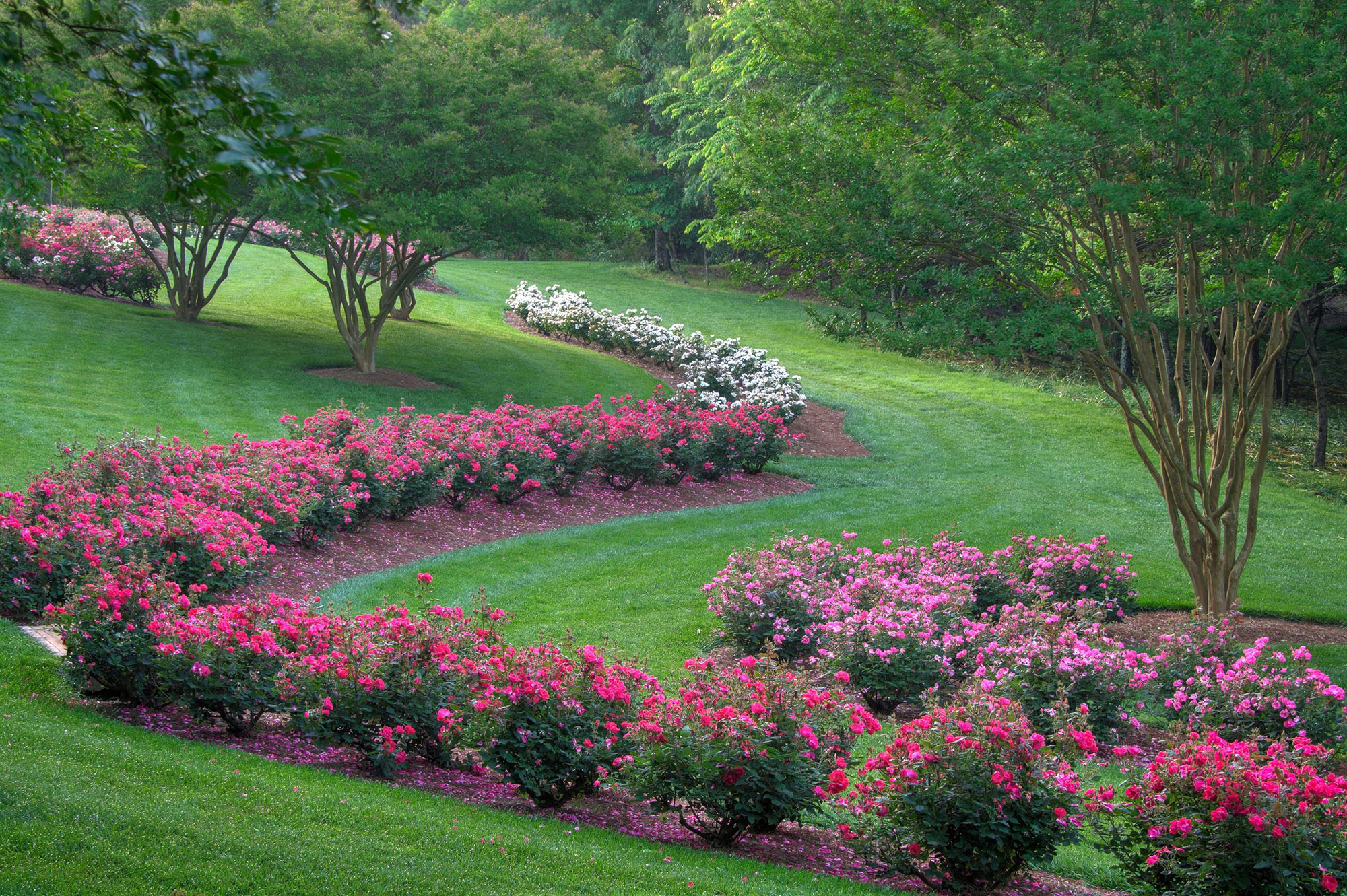 Georgia Garden: Spring Garden Tips And Inspiration From North Georgia