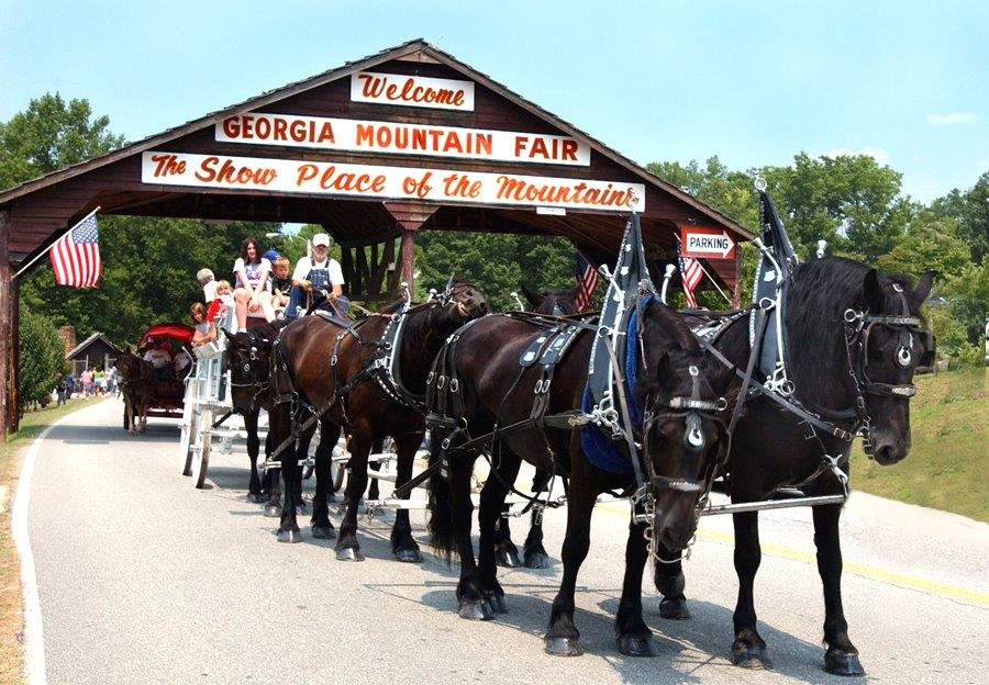Horses at the gate of the Georgia Mountain Fair in Hiawassee