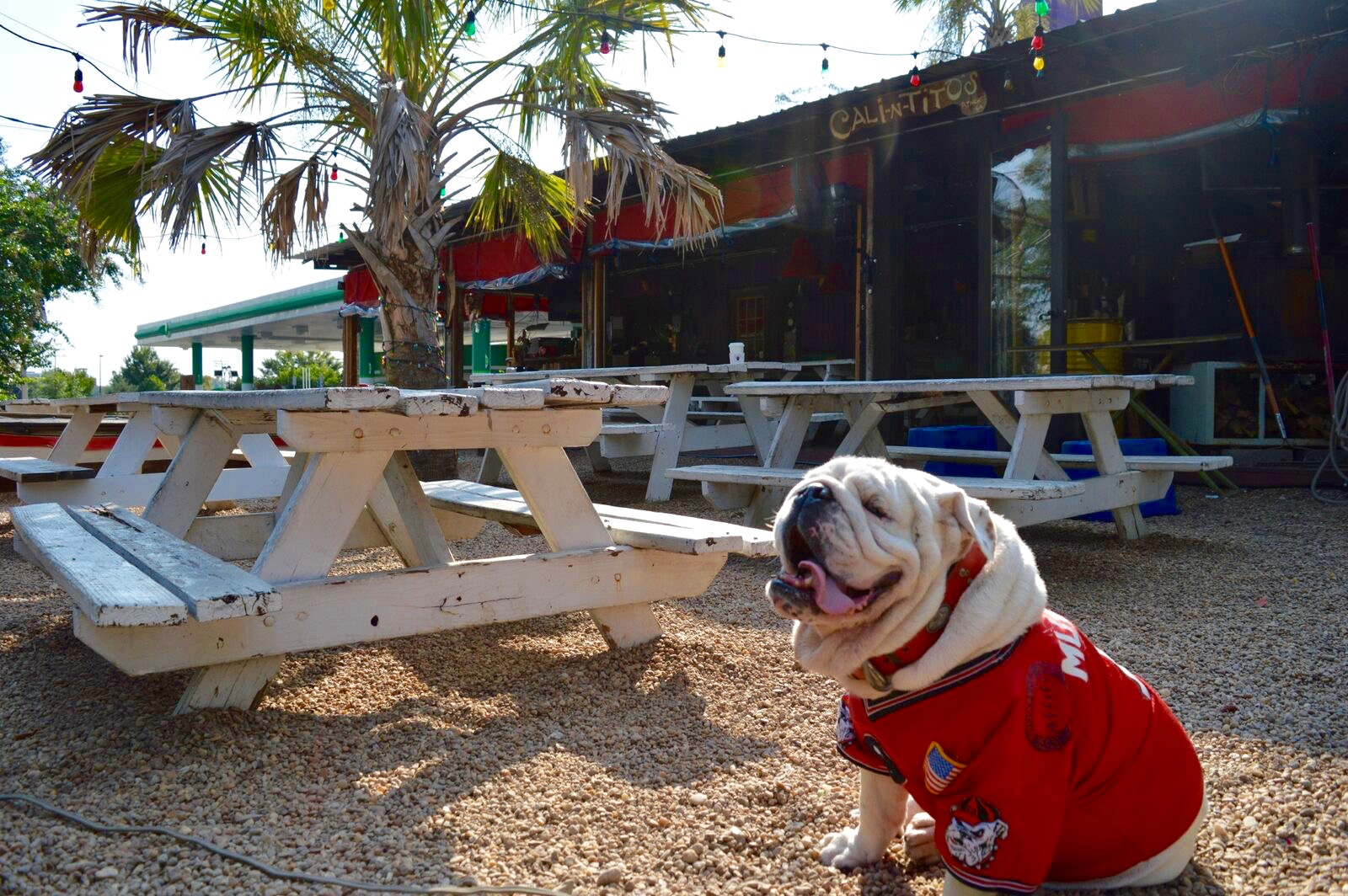 Pet-friendly dining at Cali-N-Tito's in Athens, Georgia