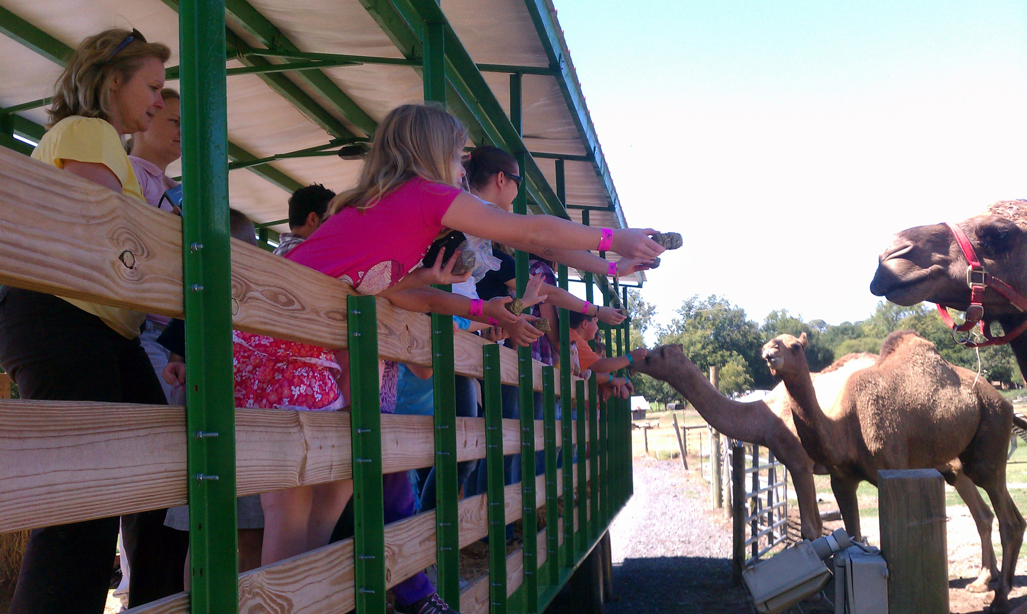 Take a hayride at Pettit Creek Farms and feed adult camels, too.
