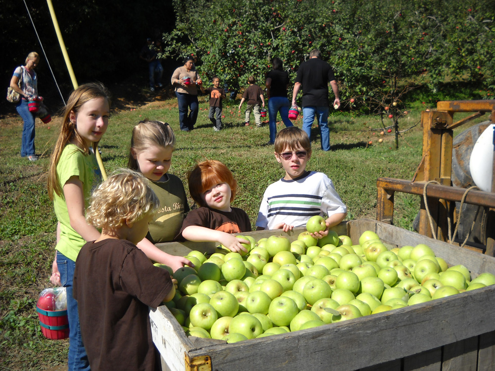 Pick your own apples at B.J. Reece Orchards in Ellijay