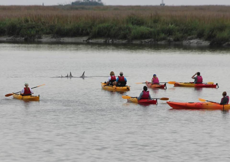 Dolphins spotted with Southeast Adventure Outfitters in St. Simons Island