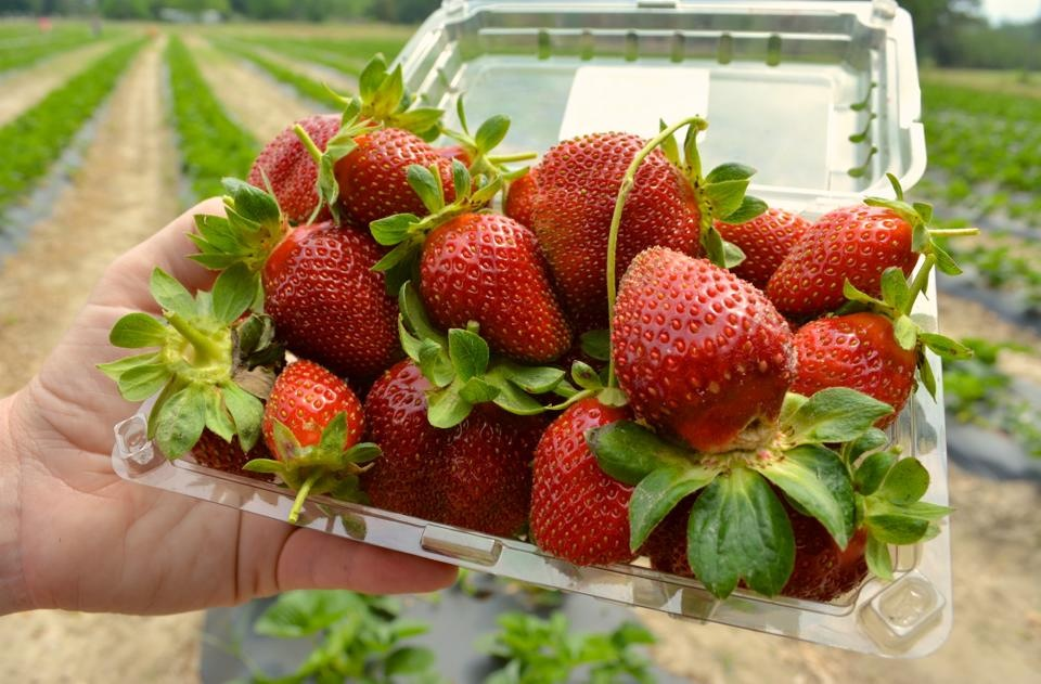 Stawberry Picking