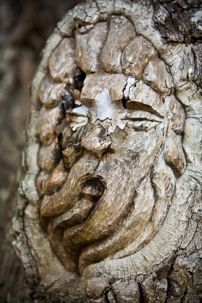 Tree Spirit on St. Simons Island