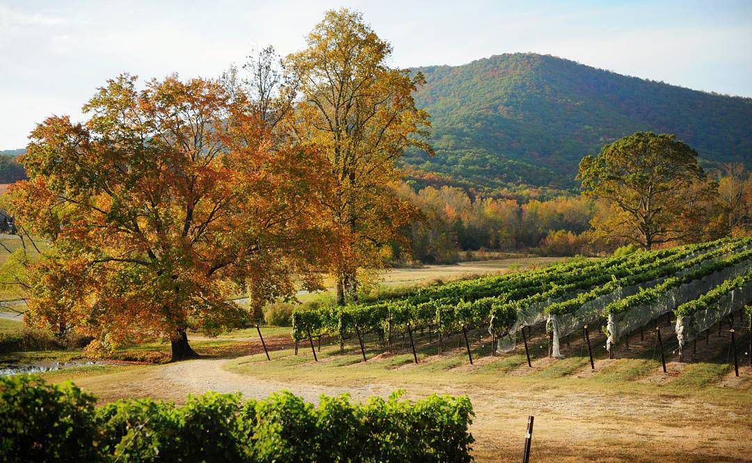 A fall view of Yonah Mountain Vineyards in Cleveland, Georgia
