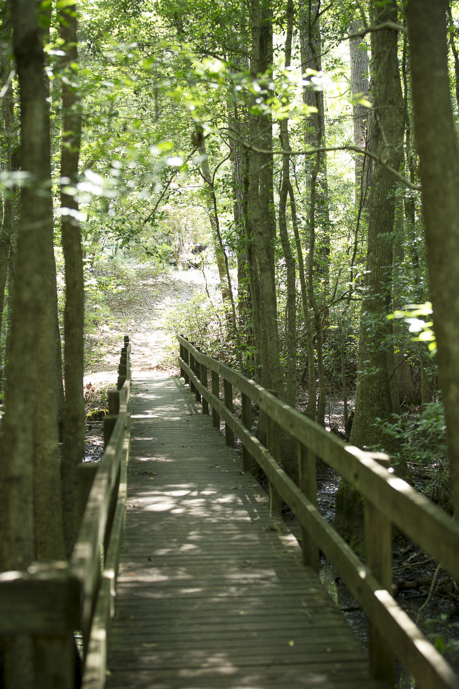 Boardwalk at Little Ocmulgee State Park