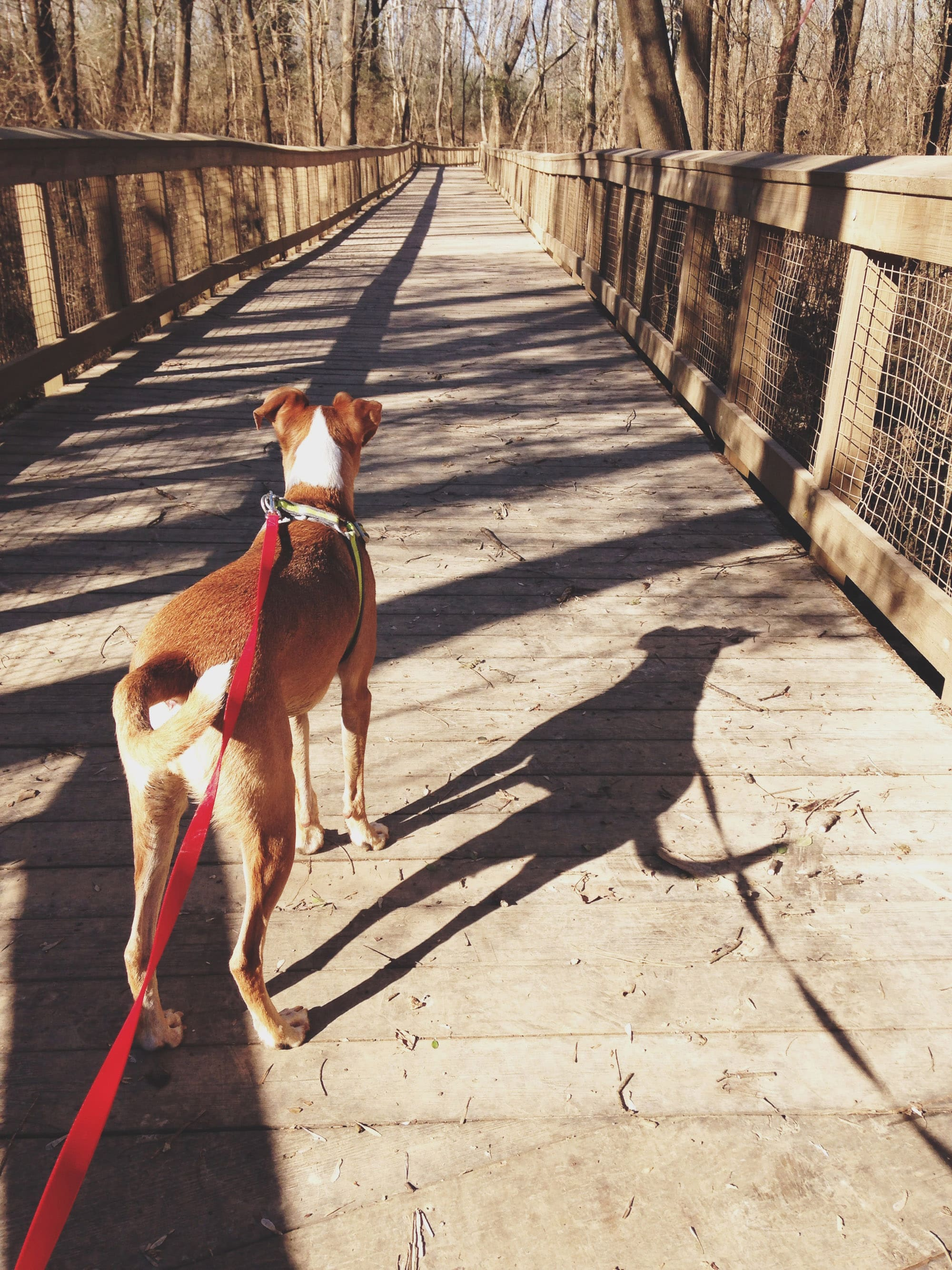 Milledgeville dog at Oconee River Greenway. Photo credit: Milledgeville CVB