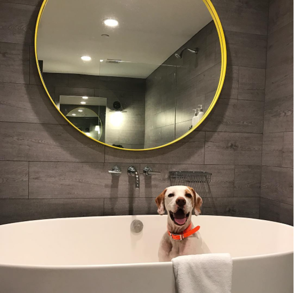Dog in a tub at pet-friendly The Brice in Savannah