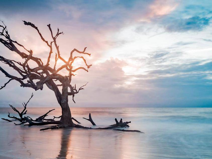 Driftwood Beach on Jekyll Island, Georgia. Photo by @joshsumner