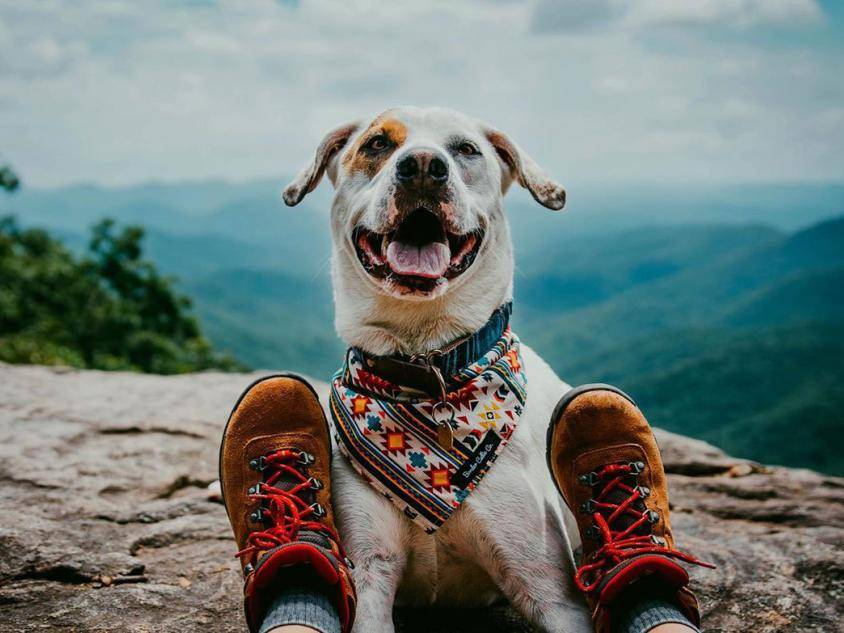 Hiking in Dahlonega, Georgia. Photo by @mymuttbeau
