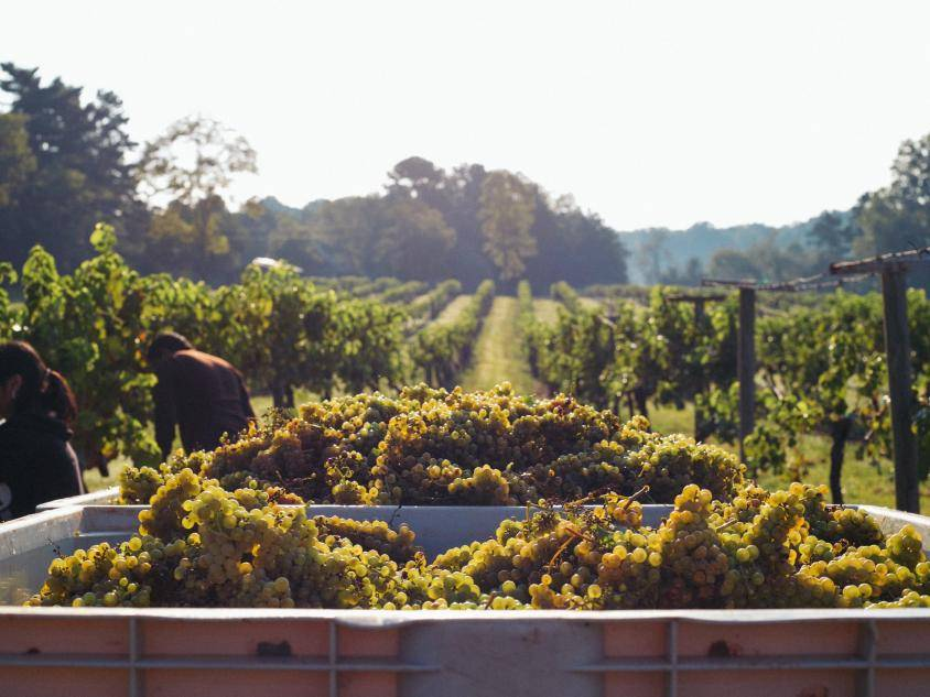 North Georgia Wineries in Tiger, Georgia