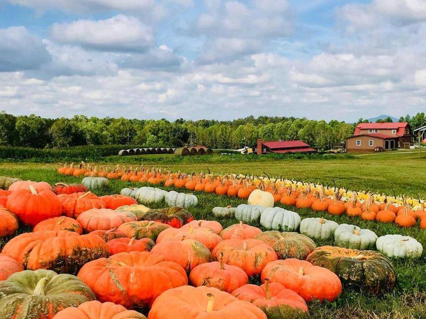 Pumpkins at Jaemor Farms in Alto, Georgia. Photo by Parker Whidby