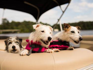 Boating on Lake Oconee. Photo credit: Harbor Club on Lake Oconee