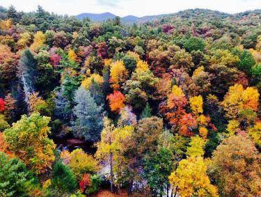 Fall colors in Blue Ridge, Georgia. Photo by Brian Poole, @wde_94