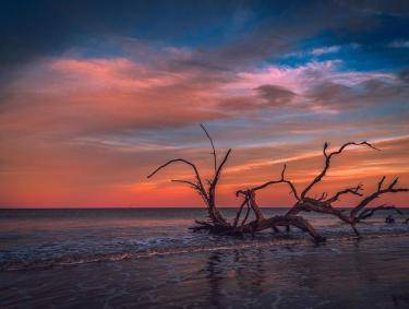 Driftwood Beach on Jekyll Island. Photo by Marco Rivera, @marco.photos