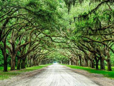 Wormsloe State Historic Site in Savannah. Photo by Chris Walters, @chriswaltersphotography