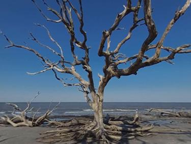 Driftwood Beach on Jekyll Island, Georgia