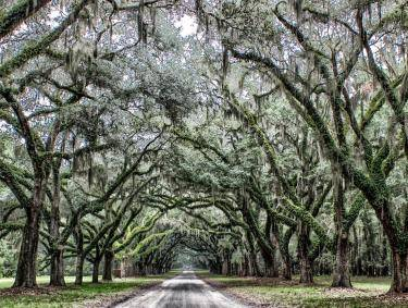 Wormsloe Plantation in Savannah, Georgia.