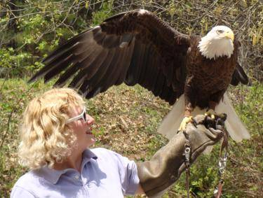 Bald Eagle Demonstrations at Elachee's Raptor Fest 2016 in Gainesville, Georgia