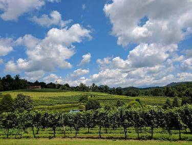 Crane Creek Vineyards in Young Harris, Georgia. Photo by @leighjphotography via CrowdRiff
