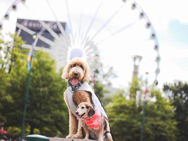 Pet-friendly Atlanta - Centennial Olympic Park