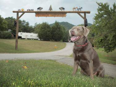 Pet-friendly Blairsville - Trackrock Campground