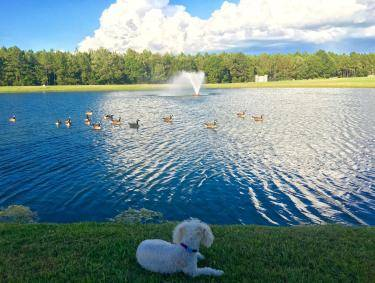Pet-friendly Dublin - Southern Pines Park