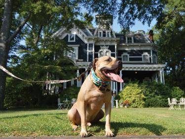 Pet-friendly Rome - Claremont House Bed & Breakfast