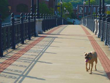 Pet-friendly trails in Rome, Georgia