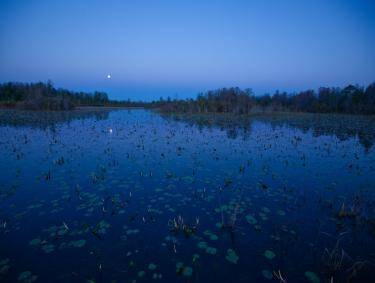 Okefenokee Swamp at night