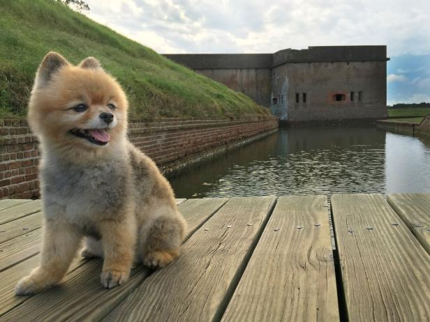savannah a pet friendly guide official georgia tourism \u0026 travela dog sits on a bridge over water at fort pulaski national monument in savannah