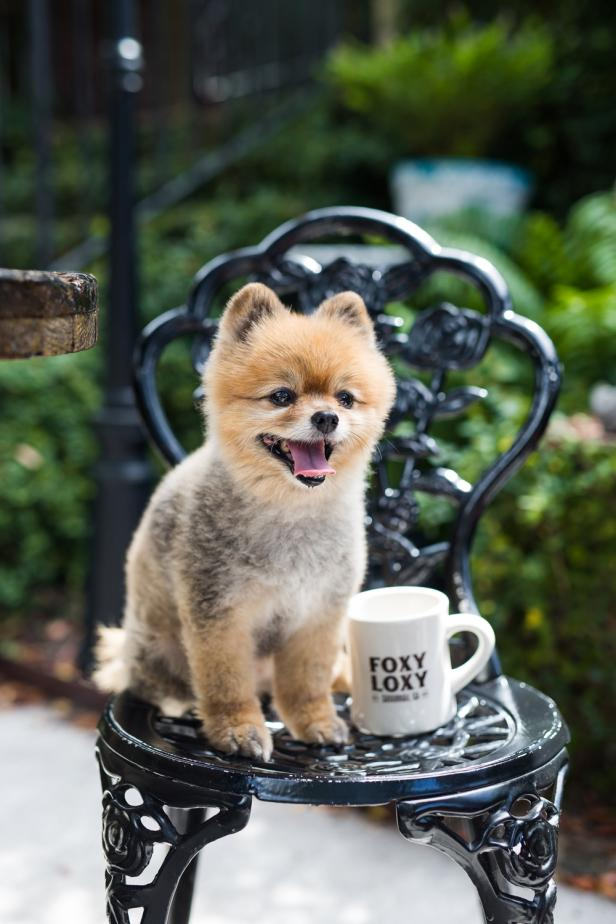 savannah a pet friendly guide official georgia tourism \u0026 travela dog sits on a chair next to a coffee cup at foxy loxy cafe