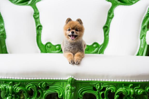 savannah a pet friendly guide official georgia tourism \u0026 traveldog sitting on a white and green sofa at the mansion on forsyth park in savannah