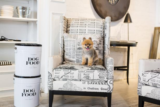 savannah a pet friendly guide official georgia tourism \u0026 travela dog sitting on a black and white chair in sylvester \u0026 co in savannah