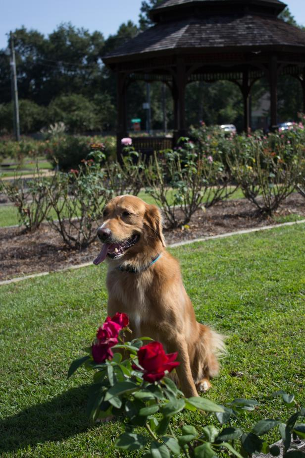 Thomasville: A Pet-Friendly Guide | Official Georgia Tourism